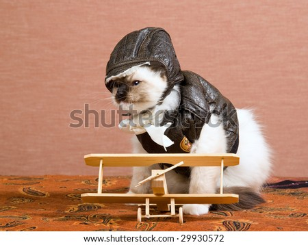 Funny Ragdoll kitten wearing pilot outfit with miniature wooden biplane - stock photo