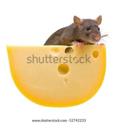 Funny rat and cheese isolated on white background - stock photo