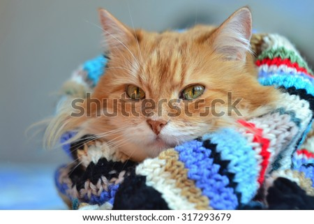 Funny red cat in cozy home atmosphere - stock photo