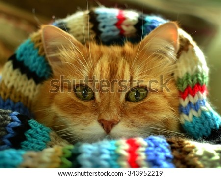 Funny red cat in cozy home atmosphere. - stock photo