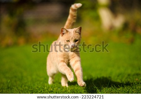 Funny red-haired cat - stock photo
