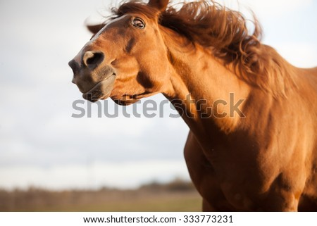 funny red horse, surprised by something, close-up, focus on eyes - stock photo
