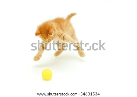 funny red kitten hunts for ball isolated on white background - stock photo