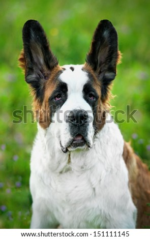 Dog Eared Stock Photos