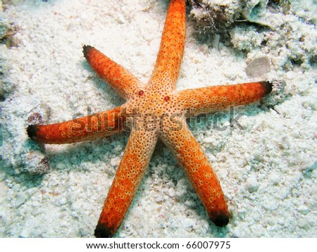 Funny seastar with eyes - stock photo