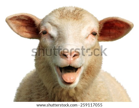 Funny sheep - stock photo