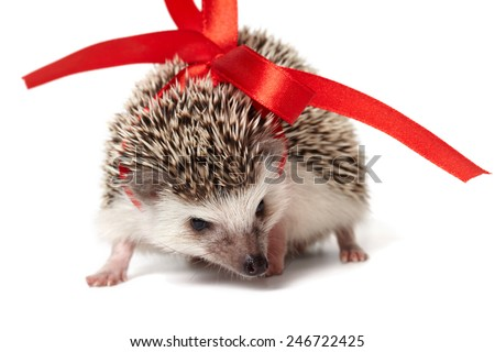 Funny small hedgehog closeup isolated on white - stock photo
