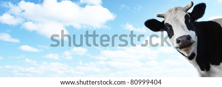 Funny smiling cow on blue cloudy sky background with copyspace - stock photo