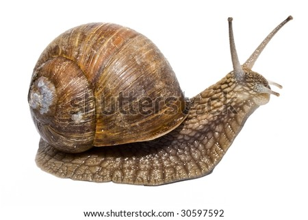 Funny snail on a white background - stock photo