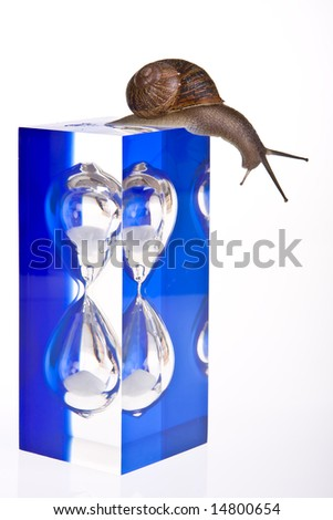 Funny snail sitting on top of a modern hour-glass - stock photo