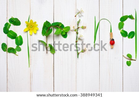 Funny spring word made of fresh leaves and flowers on rustic white wooden  background. - stock photo