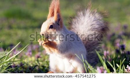 Funny squirrel - stock photo