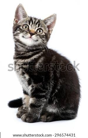Funny striped kitten sitting and smiling (isolated on white) - stock photo