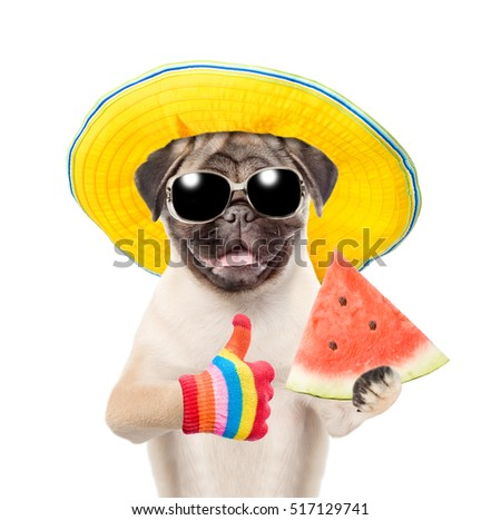 Funny summer dog in sunglasses and hat holding watermelon and showing thumbs
