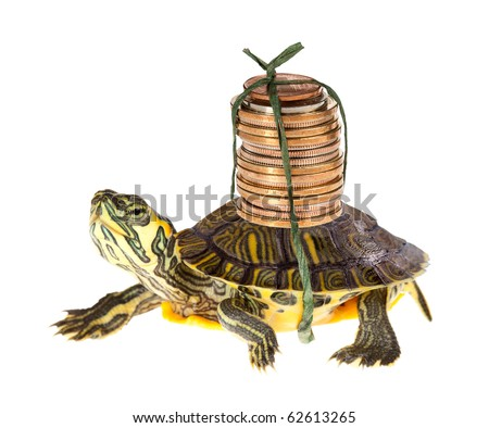 Slow Turtle Funny Funny Turtle Carrying a Stack