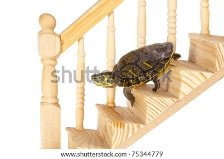 Funny turtle going down on a wooden staircase - stock photo