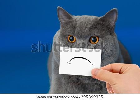 funny unhappy or sad cat - stock photo