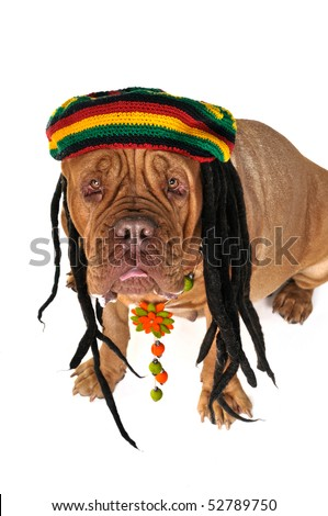 Funny View on a Big Doggy in Rastafarian Hat - stock photo