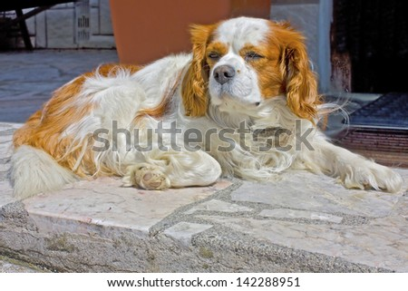 Funny white and brown dog sitting near the house - stock photo
