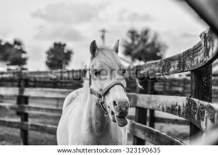 Funny white pony in a pasture