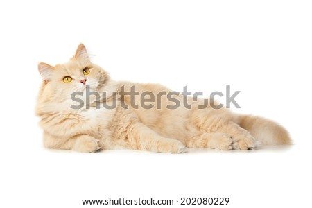 funy cat isolated over white background - stock photo