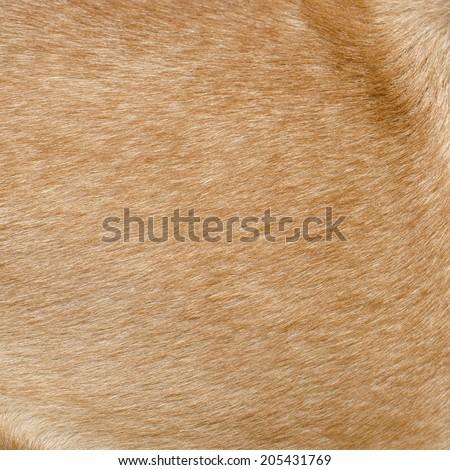 fur animal - stock photo