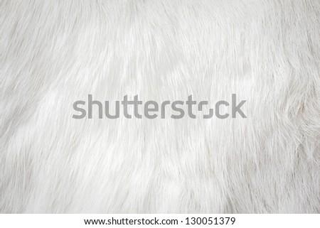 fur background - stock photo
