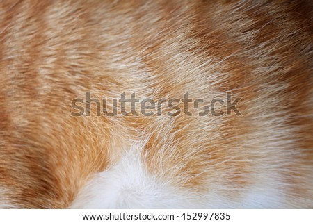 Fur cat background