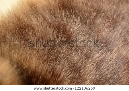 Fur closeup background. - stock photo