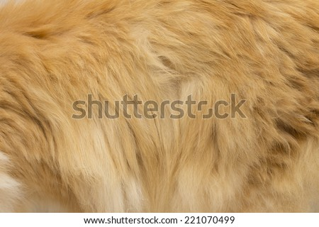 fur on the white background - stock photo