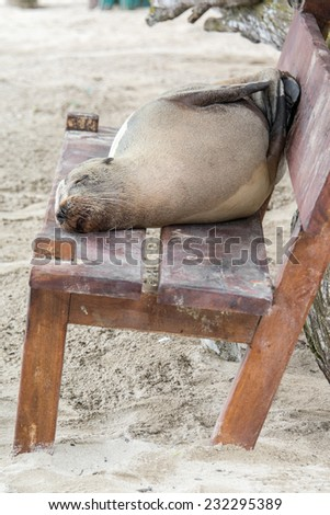 Fur seal relaxing on a bench seat, Galapagos islands - stock photo