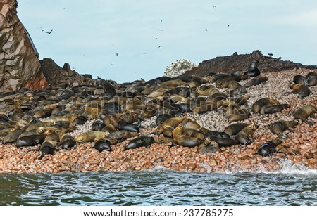 Fur seal (sea lions) rookery on Ballestas islands in Paracas national park. It is a designated UNESCO World Heritage Site - Peru, South America - stock photo