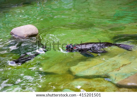 fur seal sits, swims in the water at the zoo in the summer in Sunny weather - stock photo