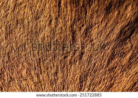 fur skin - real genuine animal brown hair closeup background - stock photo