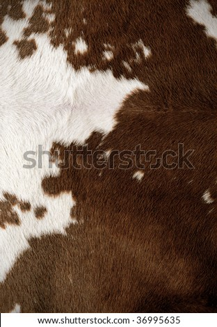 fur texture - stock photo