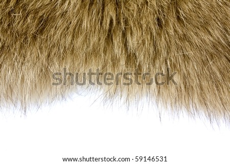 fur texture background - stock photo