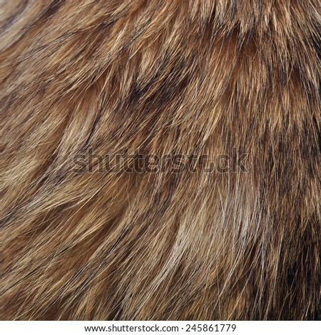 Fur texture close-up background - stock photo