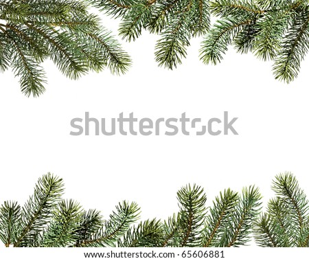 Fur-tree branches isolated on a white background - stock photo