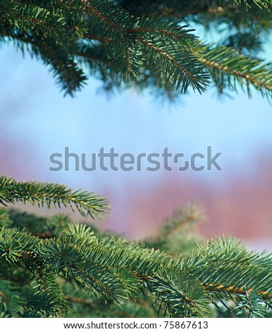 Fur-tree closeup framework. Christmas theme. Perfect background. - stock photo