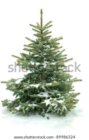 Fur tree isolated on white background - stock photo