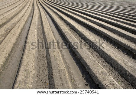 Furrows in a field that are made by a plough