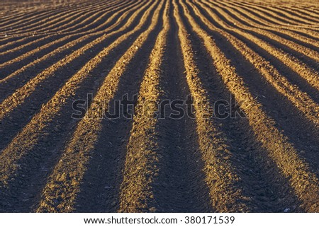 Furrows row pattern in a plowed field prepared for planting potatoes crops in spring. - stock photo