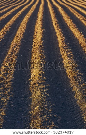 Furrows rows in a plowed field prepared for planting potatoes crops in spring. - stock photo