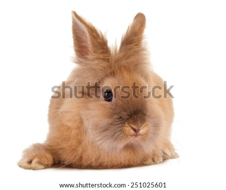 Furry little easter rabbit on a white background