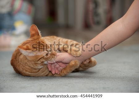 Furry Tabby cat playfully biting and clawing. - stock photo