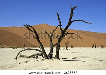Future effect of global warming - dead trees in desert at Sossusvlei Namibia - stock photo