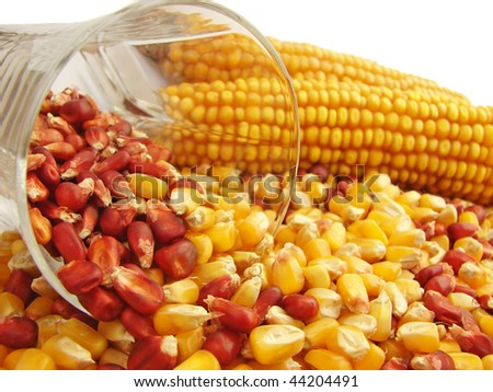 Future for Maize - stock photo