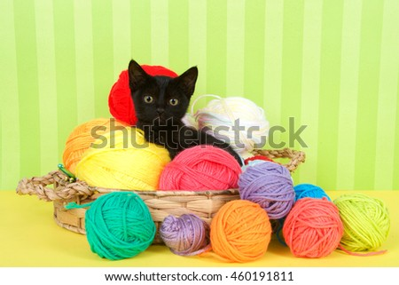 Fuzzy black kitten enjoying a comfortable spot in a crochet basket full of yarn balls. Yellow floor with green striped background. Copy Space - stock photo