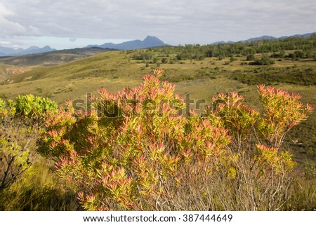 fynbus typical coast vegetation of the head gondwana nature reserve south africa - stock photo