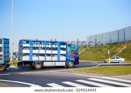 GADKI, POLAND - OCTOBER 06, 2014: Truck transporting pigs and driving on a roundabout close to a zebra crossing - stock photo